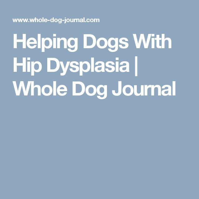 Helping Dogs With Hip Dysplasia | Whole Dog Journal