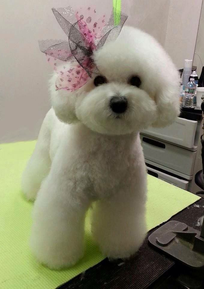 Asian Lady Grooming Dog