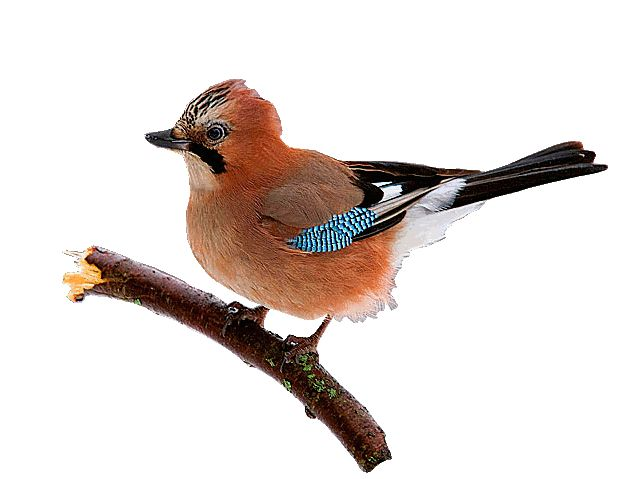 Анимационные картинки птички