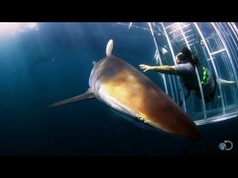 Could This Be the Voodoo Shark? | Voodoo Sharks - Shark Week 2013-- i LOVE the first 30 seconds