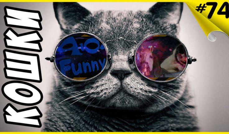 Смешные кошки Приколы про кошек Приколы коты 2017 Funny Cats