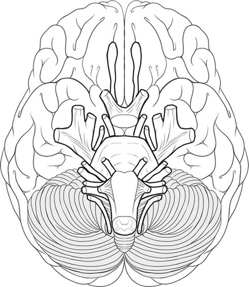 8 best human brain coloring pages images on pinterest educational brain system works coloring sheet ccuart Images
