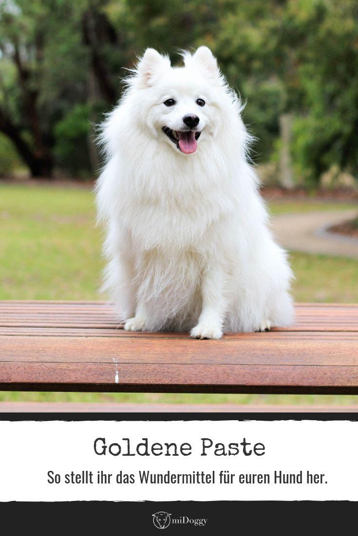 Goldene Paste für Hunde