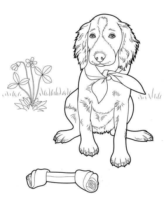 dog with the bone coloring page