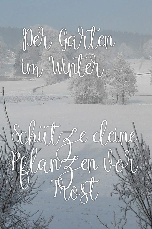 Es Ist Winter Was Gibt Es Im Garten Im Winter Zu Tun