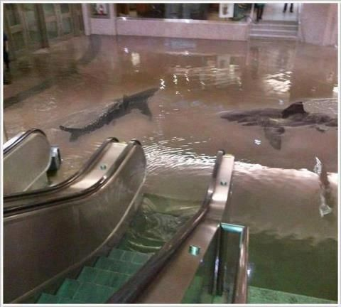 The photo below depicts sharks swimming in what looks like a shopping