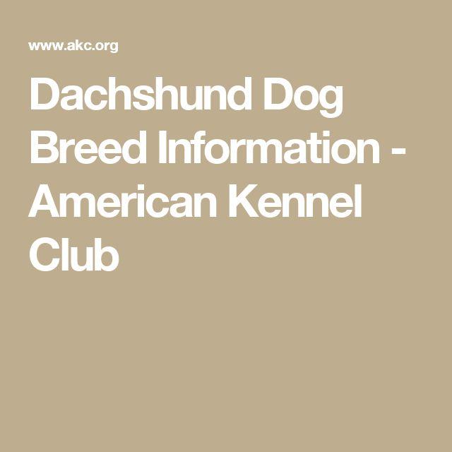 Dachshund Dog Breed Information - American Kennel Club