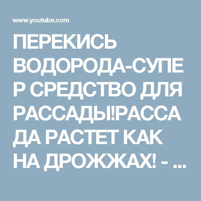 ПЕРЕКИСЬ ВОДОРОДА-СУПЕР СРЕДСТВО ДЛЯ РАССАДЫ!РАССАДА РАСТЕТ КАК НА ДРОЖЖАХ! - YouTube