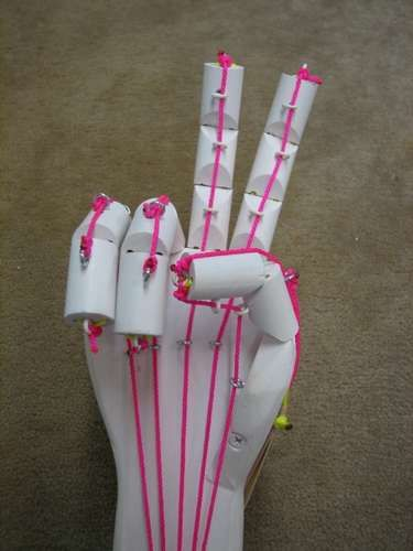 homemade articulated hand. human body activity Use with Apologia Anatomy & Physiology http://bit.ly/apologiaanatomy