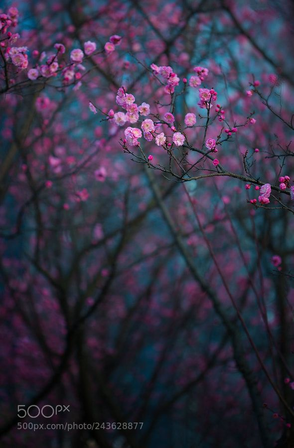 Blur flower background images hd