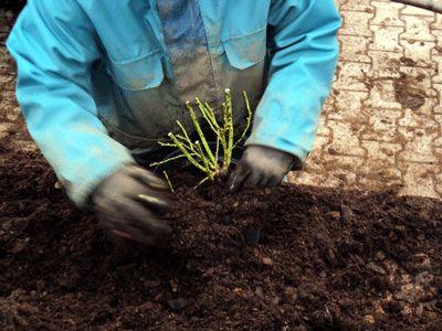 Jetzt bekomme ich meine Erde. Ich bekomme natürlich nicht irgendeine Erde, sondern speziell auf mich zugeschnittenes Substrat. Dieses Substrat lässt die Baumschule Bartels in Zusammenarbeit mit Spezialisten für Erden extra herstellen. Für mich nur das Beste.