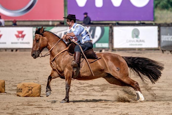 Brazilian Criollo horse. Cavalo Crioulo