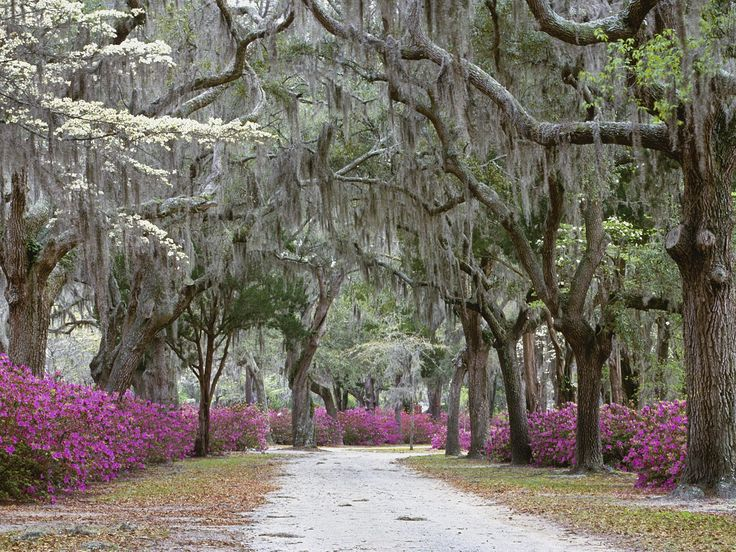 Savannah in the springtime.