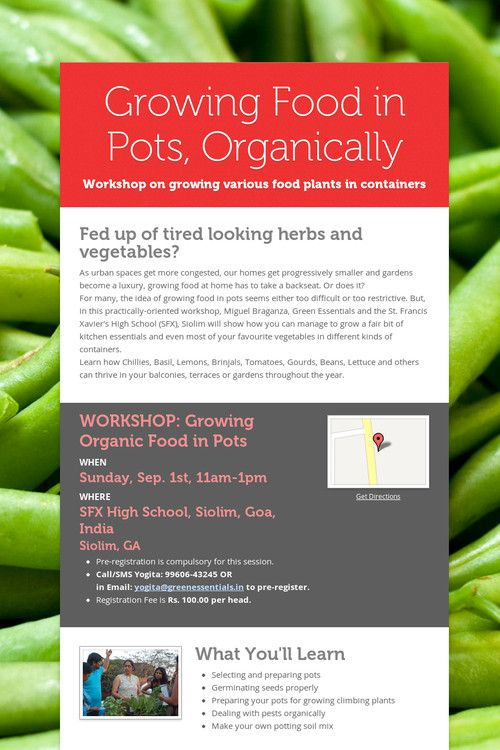 Growing Food in Pots, Organically