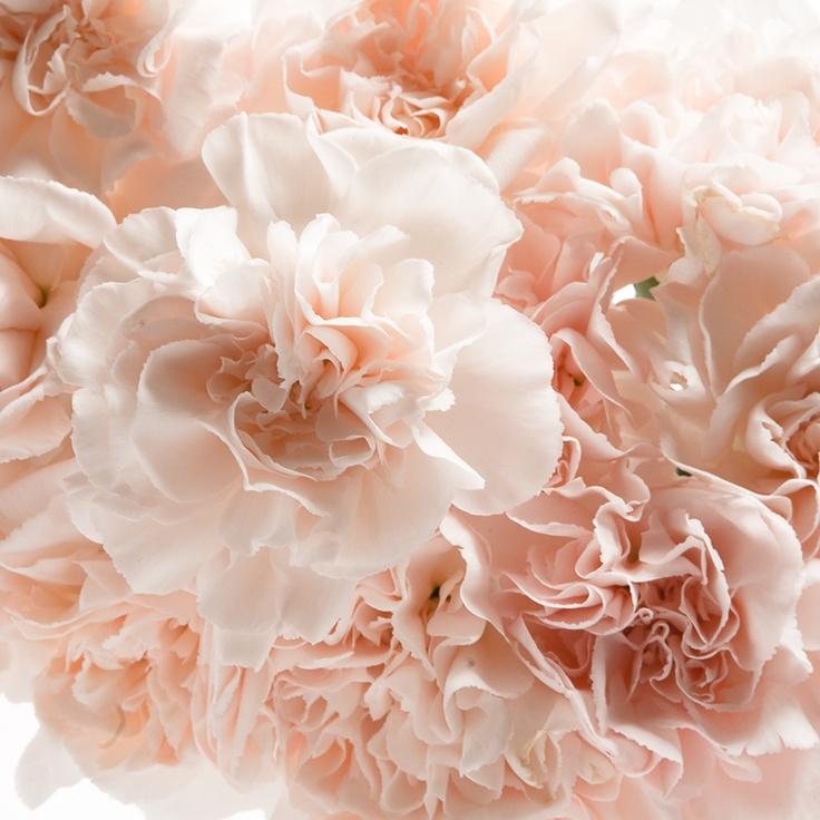 Bulk Fancy Orange Carnation Wedding Flower