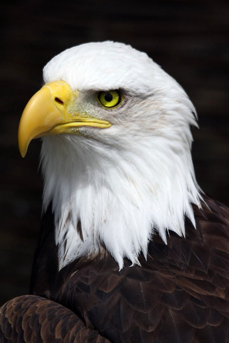 662 best orły eagle images on Pinterest | Eagles, The zoo and Zoos