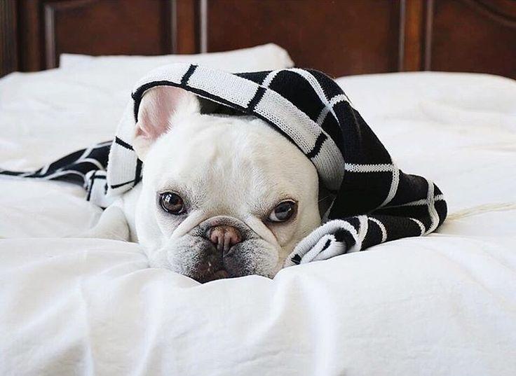 42 best Pup Gear images on Pinterest