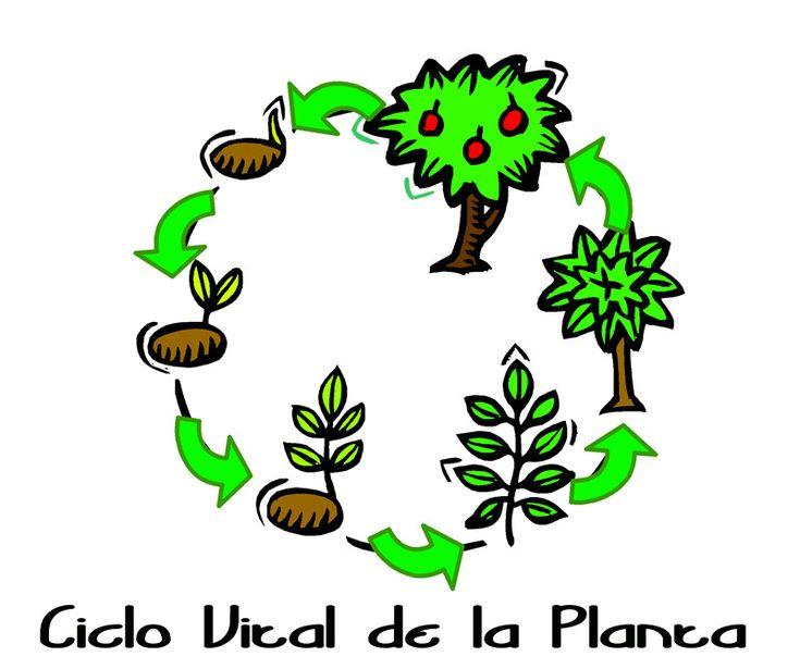 Ms de 25 ideas increbles sobre Ciclos de vida de las plantas en