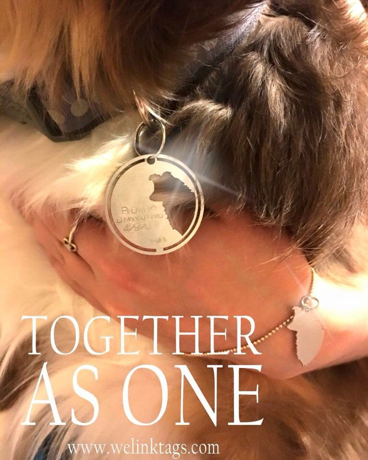 Welinktags stainless steel friendship tags for dogs and cats www.welintags.com