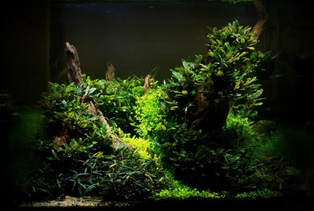 AquaScaping Aquagoin - Member Home Page