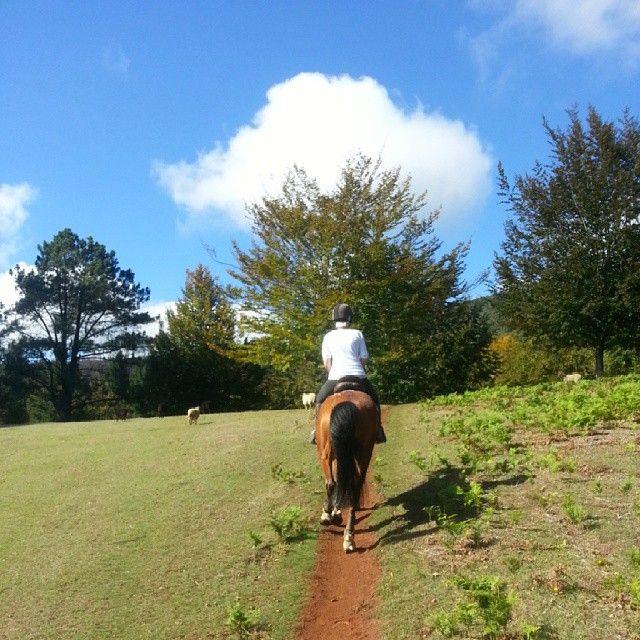 A lovely sunny Autumn day for riding in paradise #madeiraisland #horsebackriding #nature #natur #cheval #pferd #reiten