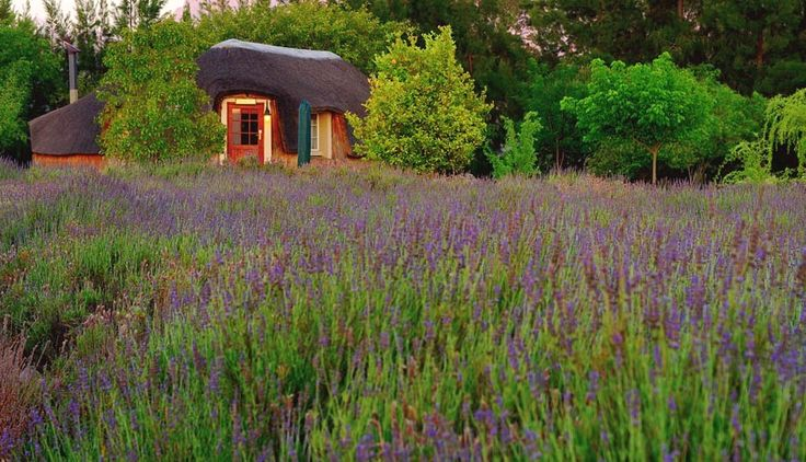 A honeymoon hut nestled in a aromatic lavender field... Definitely on my bucket list this vacation!