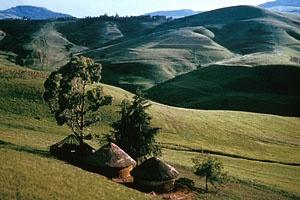 Two Houses in Transkei, Ibisi Cuttings