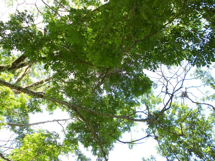 #arbol #arboles #tree #trees #naturaleza #nature #cielo #sky #verde #green #planta #plant