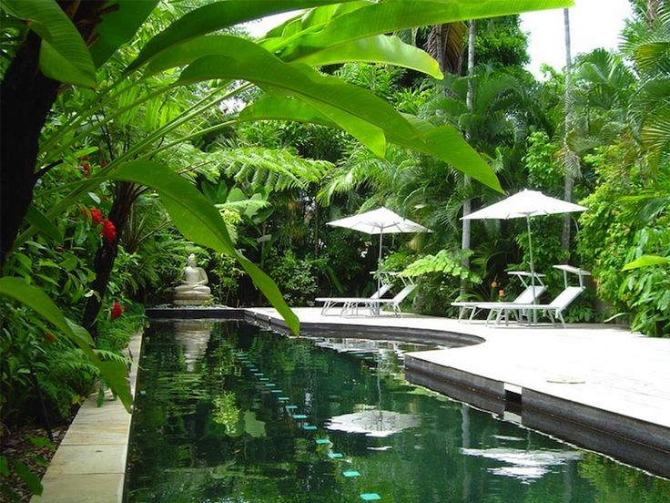 278 best images about tropical garden dreams on pinterest for Tropical pool gardens