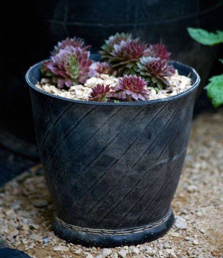 Succulents in a black rubber trug ; Gardenista