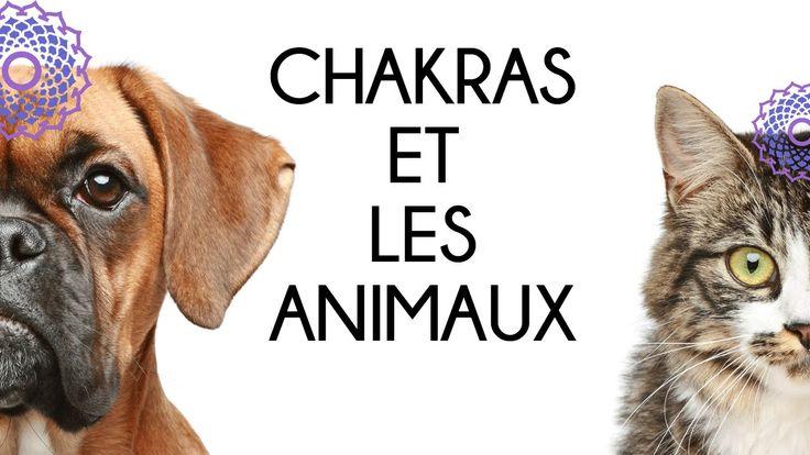 Conférence #chakras et les animaux
