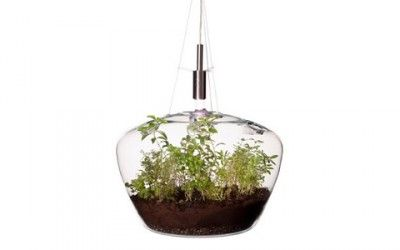 Eco-design luminoso: ecco la lampada-terrariumTuttogreen.it