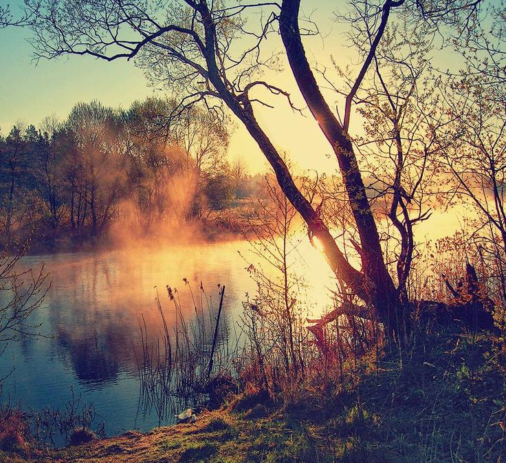 Image shows a foggy sunrise, water in the air, shows how the elements work in unison to create an ordered world of chaos in rural areas.