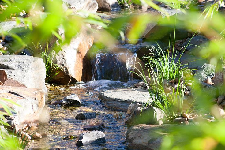Waterfall dropping into shallow running stream, with Acorus gramineus growing on the banks.