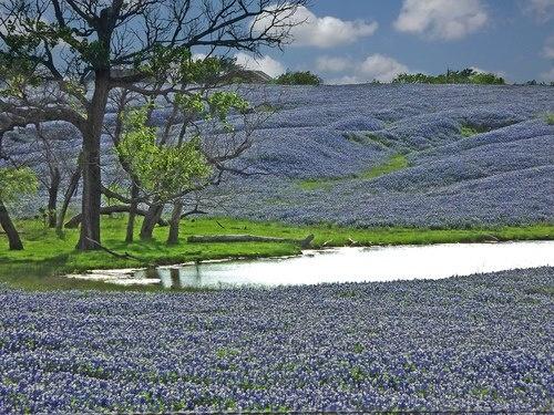 God Blessed Texas <3