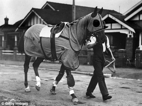 Phar Lap, rugged and being led back from morning workout by Tommy.