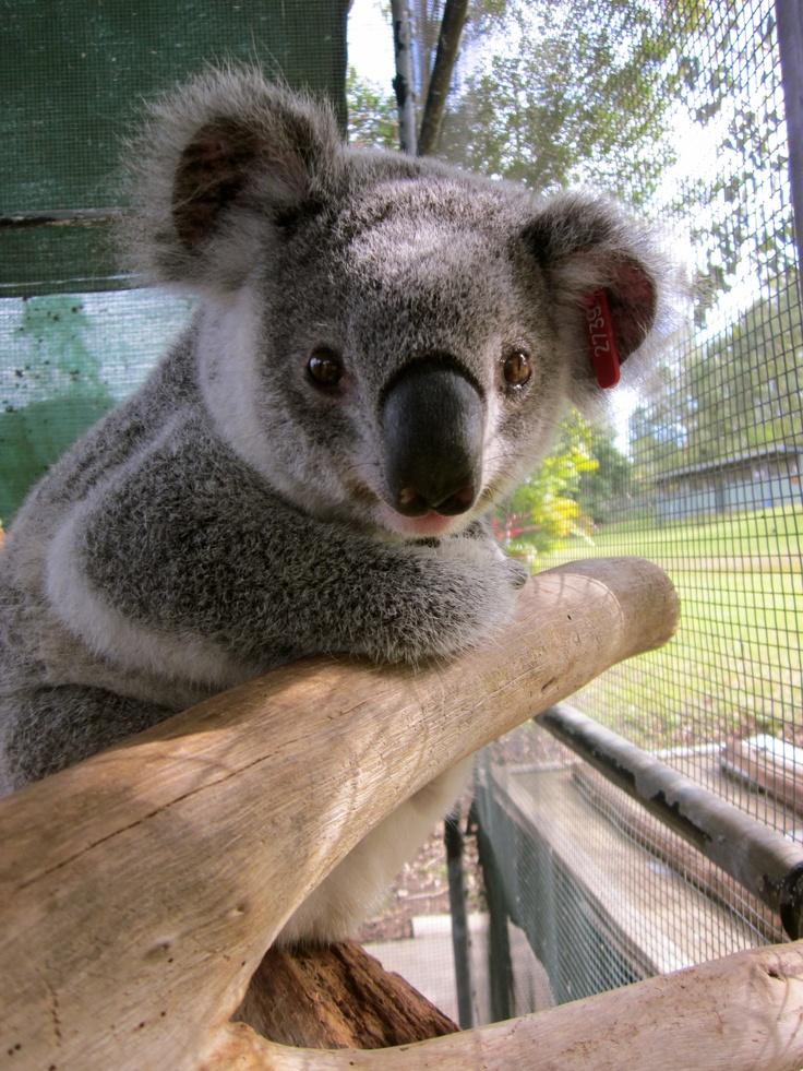 41 Best Australian Native Wildlife Images On Pinterest