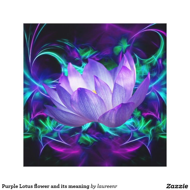 Purple Lotus flower and its meaning Canvas Print