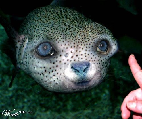 Strange Animal Photography | WEIRD ANIMALS - Sharenator.com