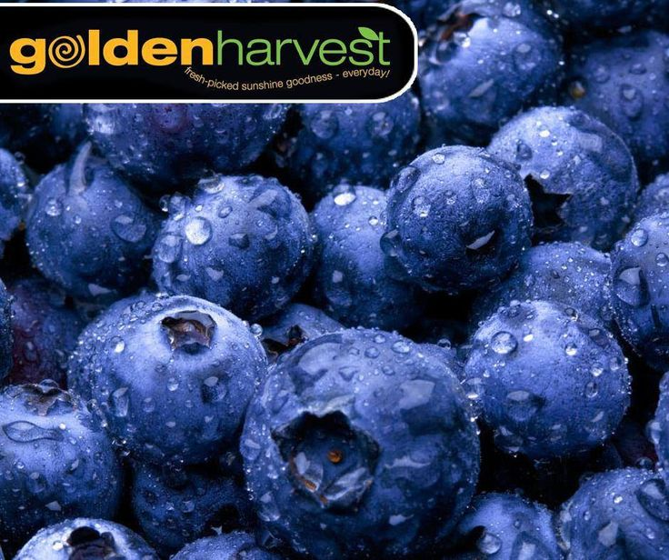 #WellnessWednesday: Blueberries are rich in antioxidants, which can help fight cancer and prevent vision loss. Visit your nearest #GoldenHarvest store for this delicious fruit.