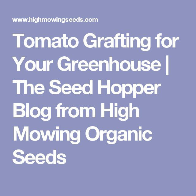 Tomato Grafting for Your Greenhouse   The Seed Hopper Blog from High Mowing Organic Seeds