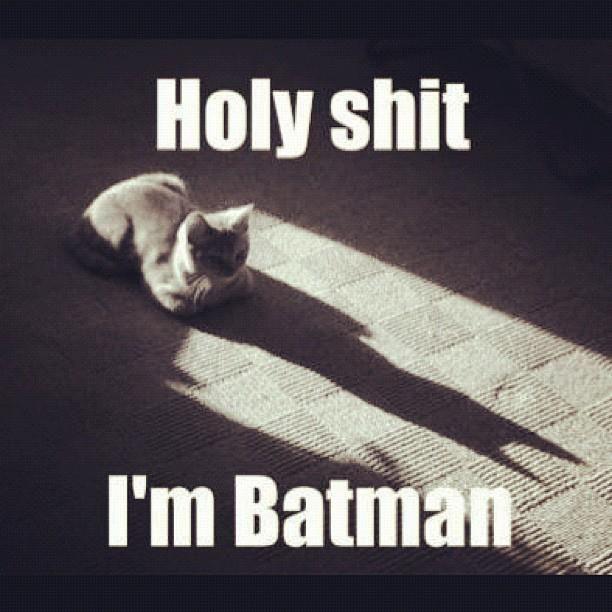 Batman-Katze