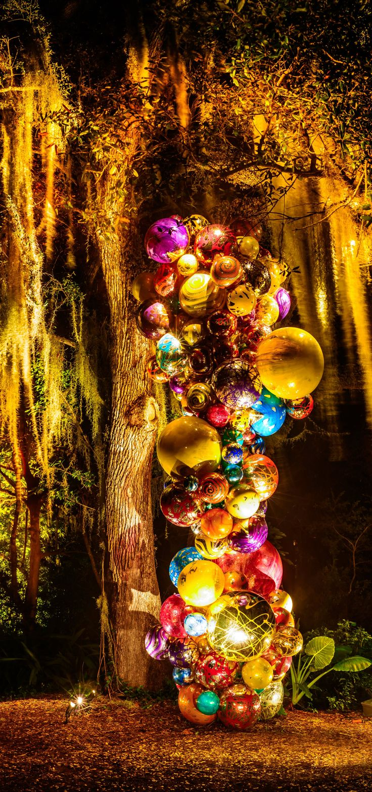 Fairchild Tropical Garden, Miami  Chihuly at night