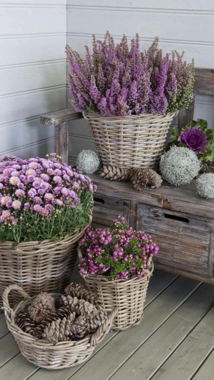 Heather and purple chrysanthemums in basket - charming <3