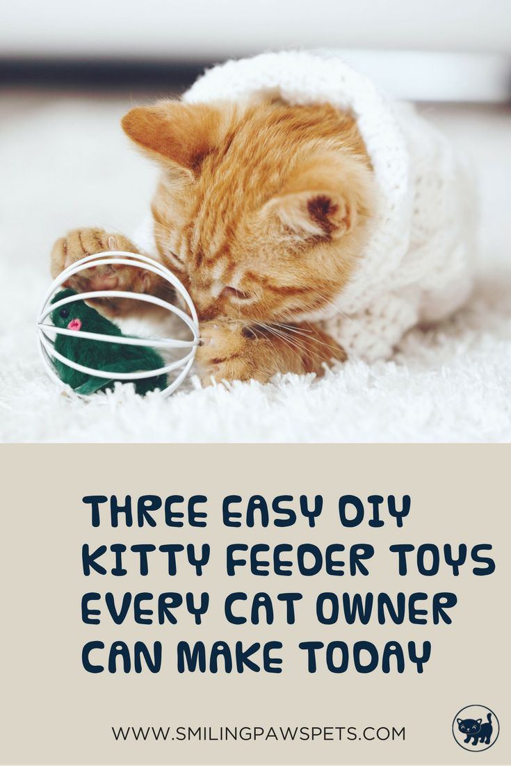 Learn how to make these awesome feeder toys for your cat today. Puuurfect!