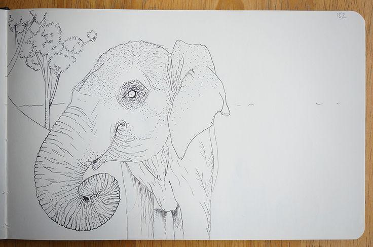 Elephant - Portraits in landscape
