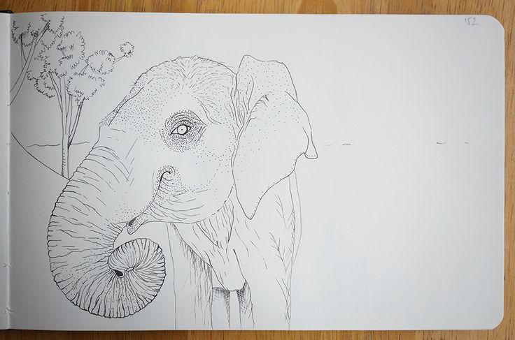 Elephant - Portraits in landscape
