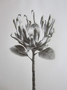 Protea Art on Pinterest                                                       …