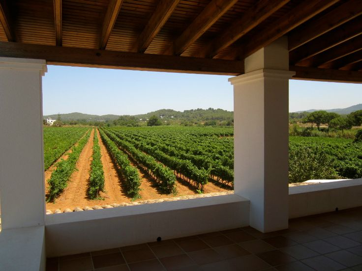 Viñedos Ibicencos Ibiza Winery  #ibiza #ibiza2016 #formentera2016 #formentera2016 #spain #island #pitiusas #luxury #luxurytravel #summer #spaceibiza #australia #melbourne #sydney #ilovemelbourne #housemusic #love #happy #cover #architectura #ibizanightclub #ibizaluxurytravel