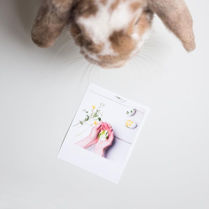 #kralik #vyvolejto #polaroid #photo #photos #rabbit #easter #happyeaster